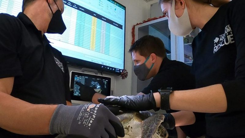 three people holding a sea turtle look at an ultrasound screen