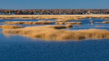 coastal ecosystem with water and grasses with community of houses in background