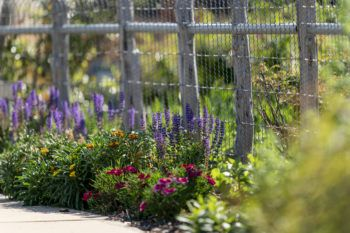 colorful flower bed in front of a barbed wire fence